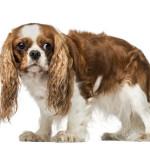 Nervous dog
